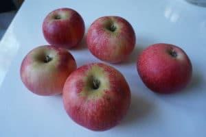 Einsteigerobst #2 Apfel – Apfelmus selber machen
