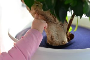 Pflanzen kindersicher machen - DIY