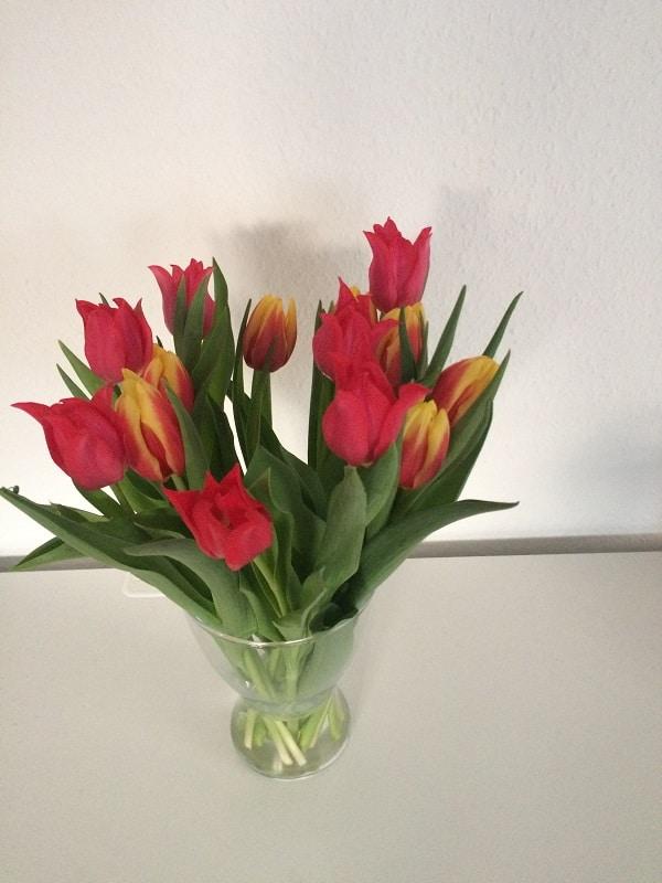 Freitagslieblinge von breifreibaby - endlich wieder Tulpen