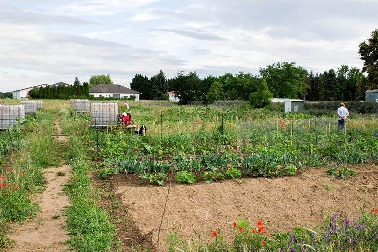 Unser Traum-Saisongarten mit eBay Home & Garden