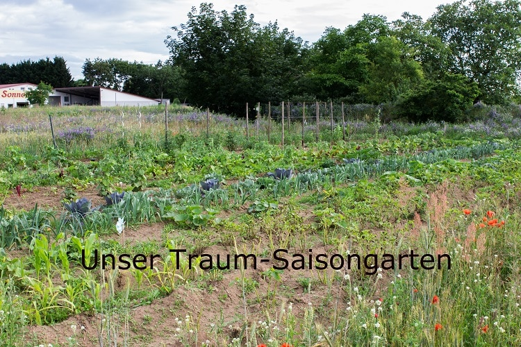 Unser Traum Saisongarten - eBay Home & Garden machts möglich