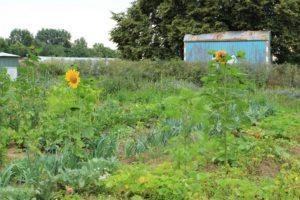 Garteneröffnung 2017 – Saisongarten mit Kindern