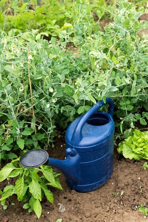 Saisongarten mit Kindern - wir lieben die Gartenzeit