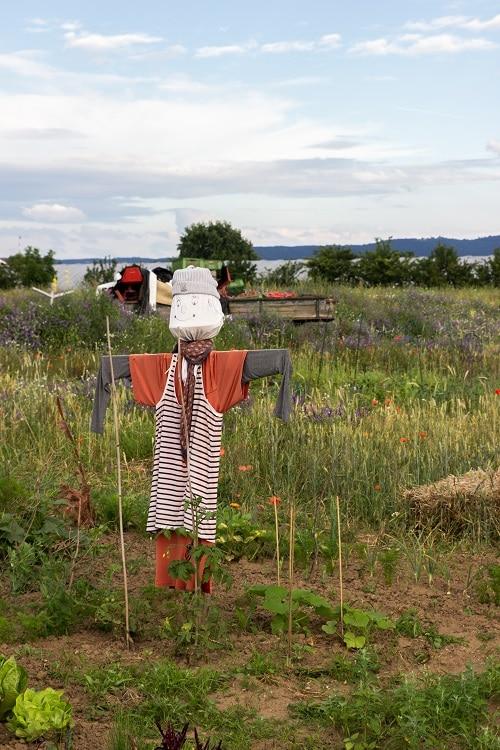 Wir lieben unseren Saisongarten mit Kindern und Vogelscheuche