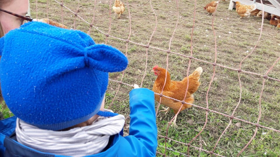 Auf dem Hofgut Oberfeld - Hühner anschauen - Wochenende in Bildern Ostern