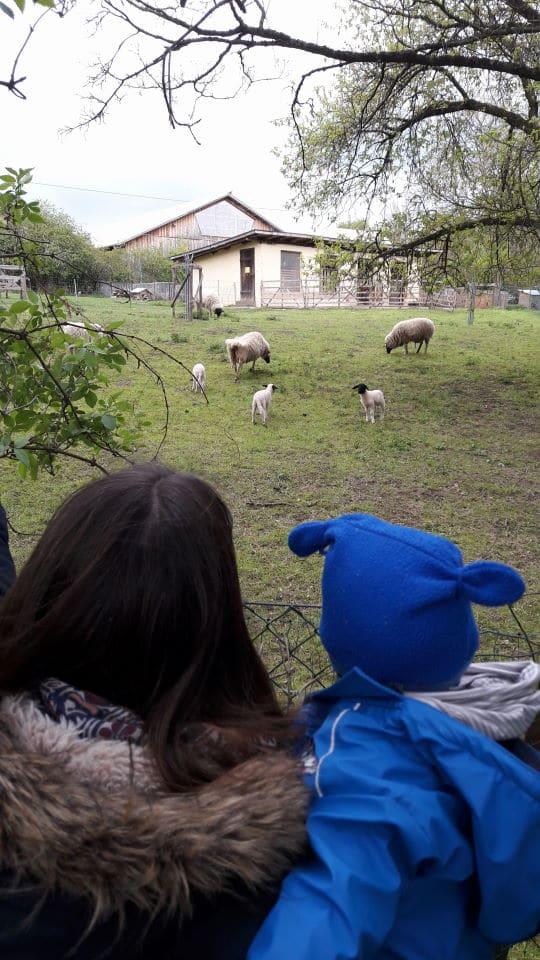 Mama, Baby und Schafe - positive Kindereigenschaften - Neugierde