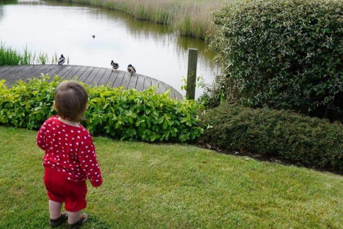 Kind am See bei den Enten - Kindereigenschaften Neugierde und Begeisterungsfähigkeit