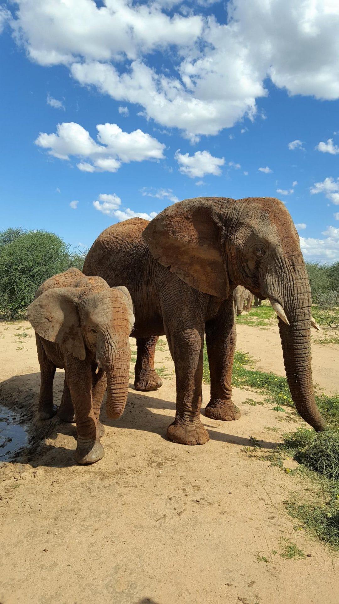 Reisetipps für Namibia mit Kleinkind
