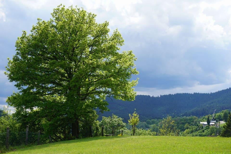 [Anzeige] Schwarzwald Ferienhaus mit Kindern – unser traumhafter Kurzurlaub in Alpirsbach