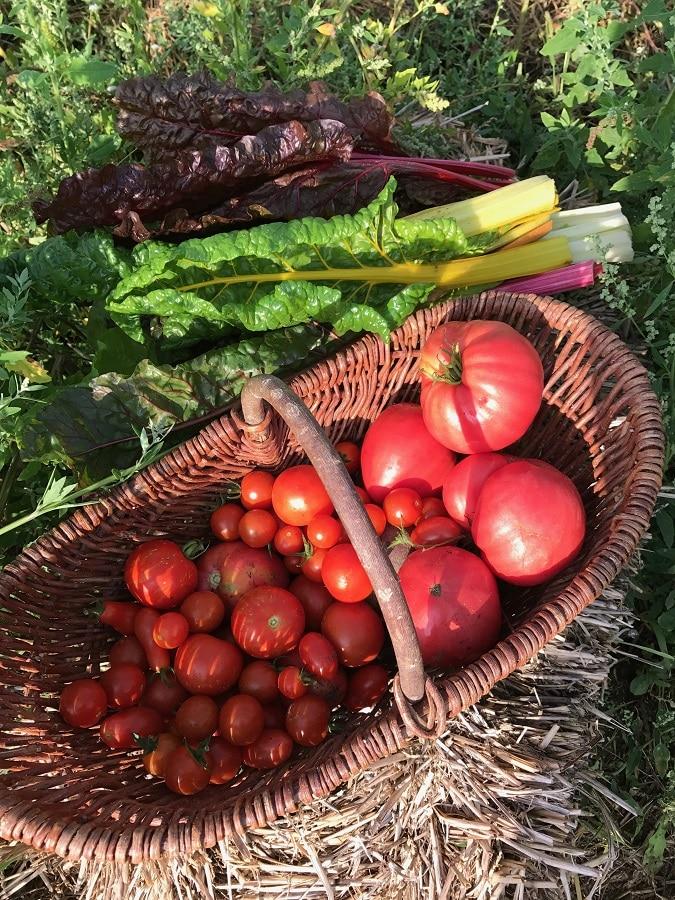 Freitagslieblinge mit Tomaten aus dem Saisongarten