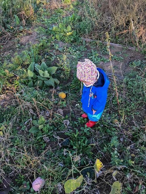 Gartentipps zum Gärtnern mit Kleinkind