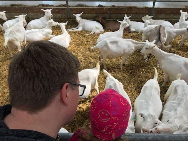 Der Bio Ziegenhof in Holland - De Mekkerstee ist ein tolles Ausflugsziel in Südholland für einen entspannten Tag als Familie mit Kindern