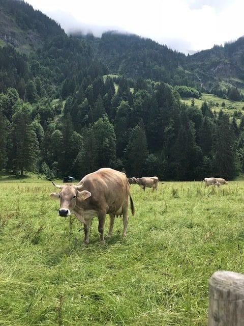 Wandern mit Baby zum Beispiel in Südtirol